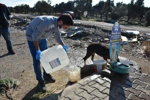 Edremit Belediyesi sokak hayvanlarını unutmuyor