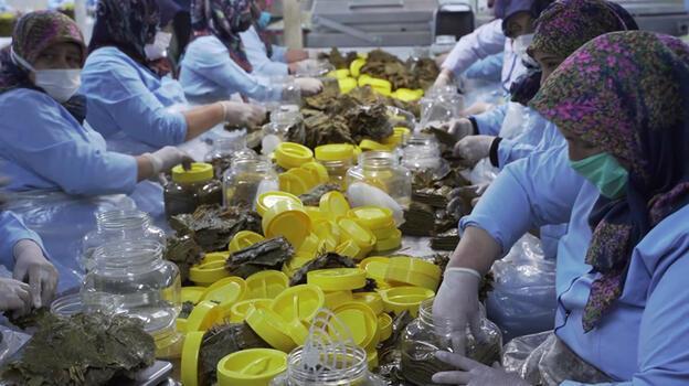 Erbaa ilçesinin tescilli asma yaprağından 200 milyon liralık gelir hedefleniyor