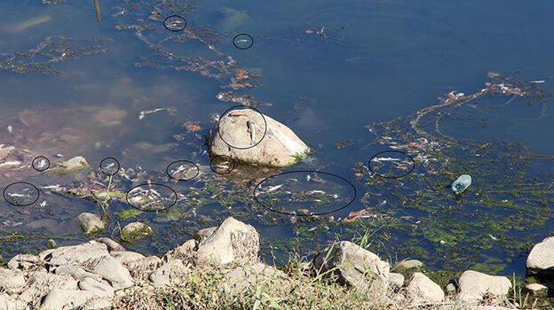 Su seviyesi azalan Dicle Nehri'nde ölü balıklar kıyıya vurdu