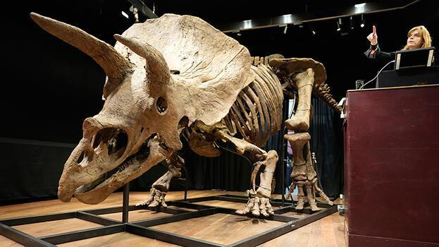 Bilinen en büyük boynuzlu dinozor rekor fiyata satıldı