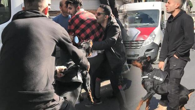 Sokak ortasında akılalmaz kavga! Doberman köpeği kardeşine saldırttı