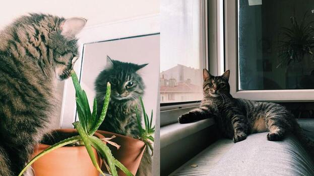 Mahkemeden 'kedilerin velayeti' davasında emsal karar