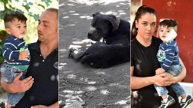 Antalya'da pitbull, 11 aylık bebeğin yanağını ve kulağını kopardı