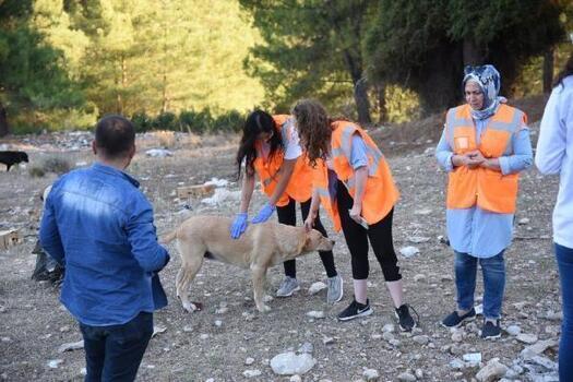 Osmaniye'de, sokak hayvanlarını besleme çalışması