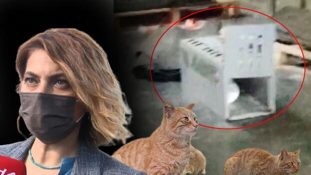 AVM'deki 'kedi kapanı' tepkisi! Polis el koydu