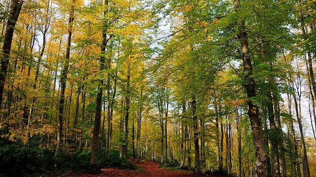 Sinop'ta Orman Bölge Müdürlüğü kuruldu