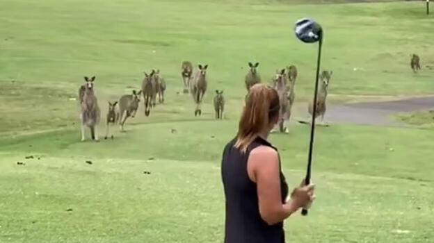 İstila ettiler! Golf oynayan kadın neye uğradığını şaşırdı