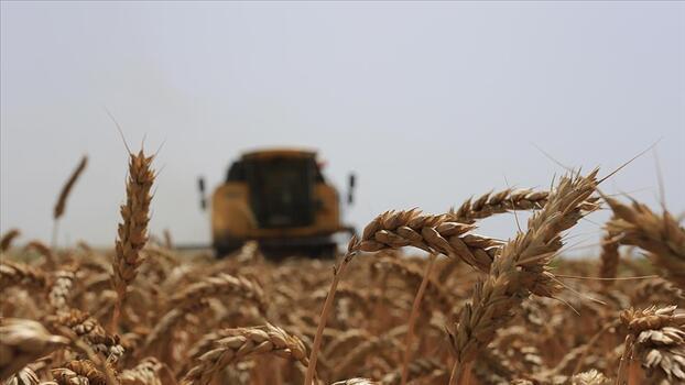 Konya'da buğdayda verim değişimi ve gelir kaybı riskine TARSİM teminatı sağlandı