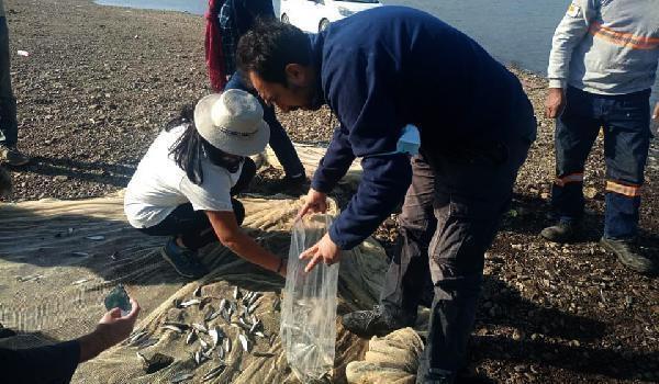Tahtaköprü Baraj'ında balık türlerinin tespit çalışması