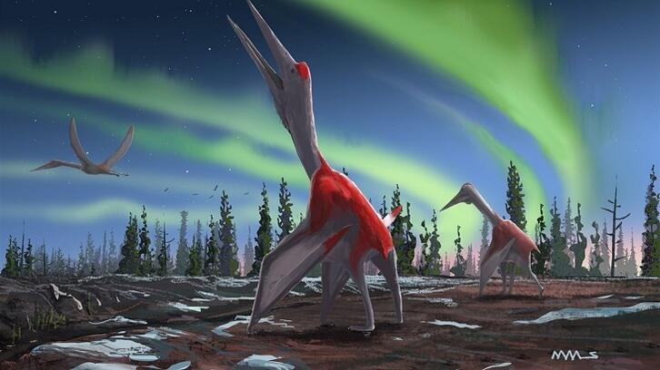 Bilim insanları ejderha keşfetti