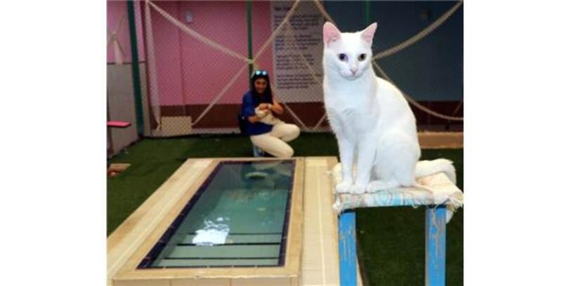 Van Kedileri İçin Havuz Sezonu Kapanıyor