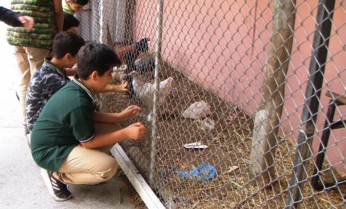 Okul bahçesindeki kümeste öğrencilere hayvan sevgisi aşılanıyor