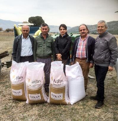 Yerli tohum 'Özkan', Döşemealtı'na ekildi