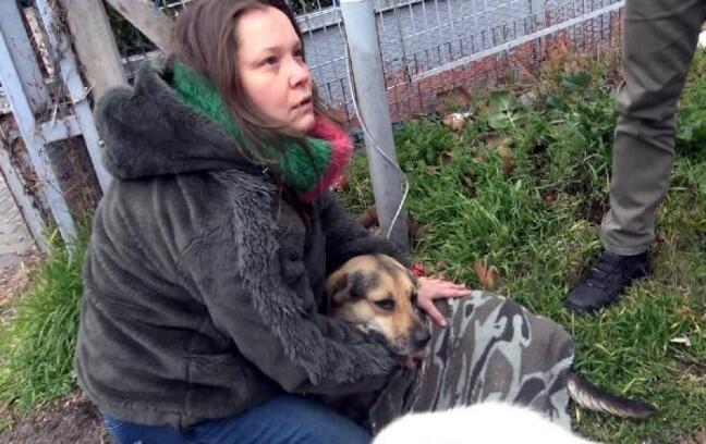 Yaralı köpeğin acısını dindirmek için çırpındı