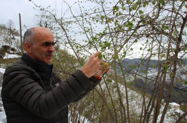 Giresun'da zirai don fındıkta ürün kaybına yol açtı