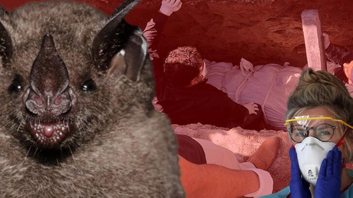 Son dakika haberleri: Corona virüs salgınına neyin yol açtığını bilim insanları açıkladı!