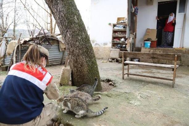 Vefa Sosyal Ekibi, sokak hayvanları için seferber oldu