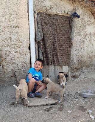 Hacı Ali ve kangal yavruları birlikte büyüyor