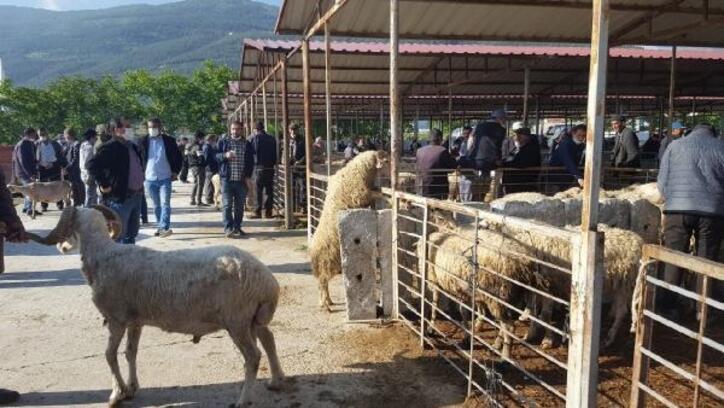 Çay hayvan pazarı açıldı