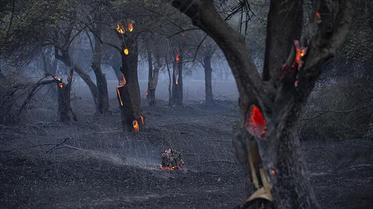 Ciğerlerimiz yanıyor... Çanakkale'den yeni fotoğraflar geldi