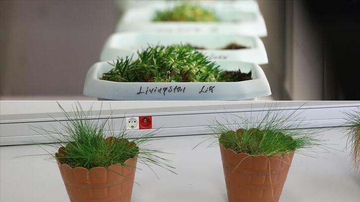 Antarktika'daki bitkilerin yakın zamanda yaşamaya başladığı belirlendi