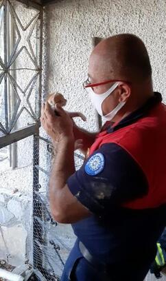 Duvara sıkışan yavru kedi yavrusu kurtarıldı