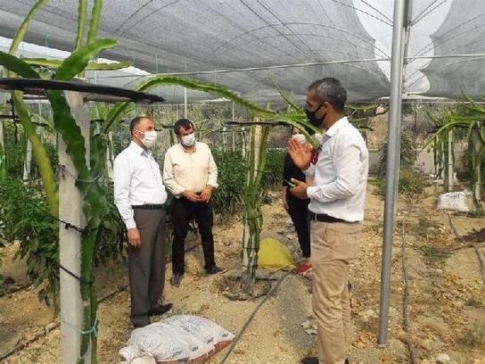Hatay'da ejder meyvesi üretimine başlandı
