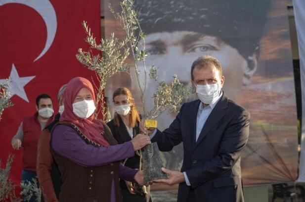 Büyükşehir'den üreticilere binlerce zeytin fidanı desteği