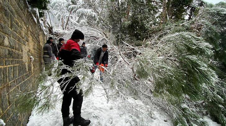 Son dakika... Düzce'den sonra İstanbul'da da bir ağaç aracın üzerine devrildi