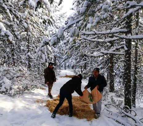 Hisarcık'ta yaban hayvanları için doğaya yem bırakıldı