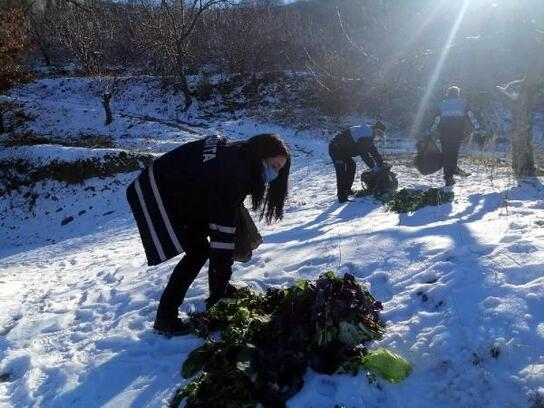 Alaşehir'de pazardan toplanan gıda maddesi atıkları yaban hayvanlarına yem oldu