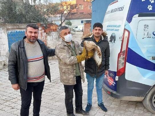 Turgutlu'da yaralı bulunan kızıl şahin tedaviye alındı