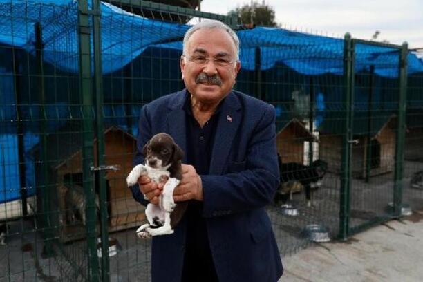 Ordu'da sokak hayvanları için Karadeniz'in en büyük hastanesi kuruluyor