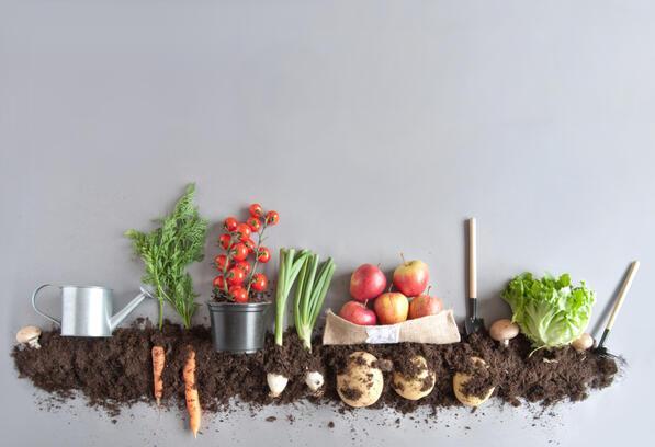 Kompost Nedir Ve Evde Kompost Nasıl Yapılır?
