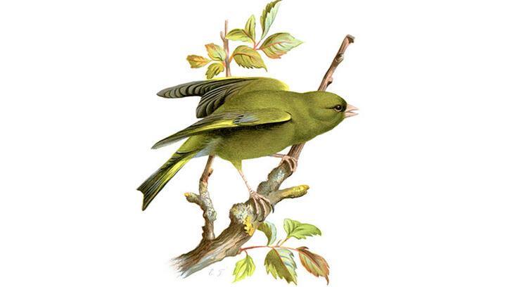 Keloğlan masalı: Keloğlan ile sihirli kuş masalı oku