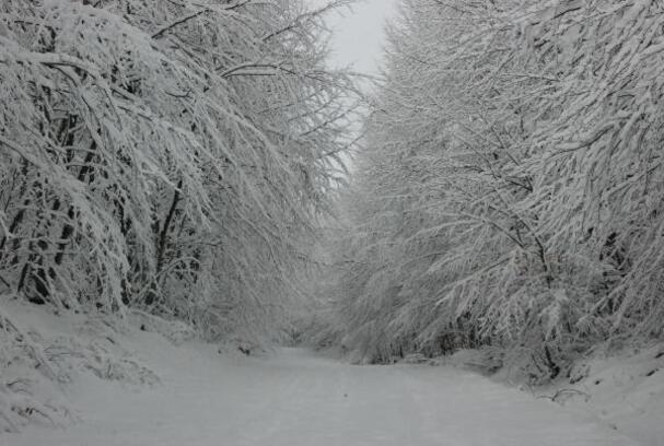 Bartın'da milli parkta kar güzelliği