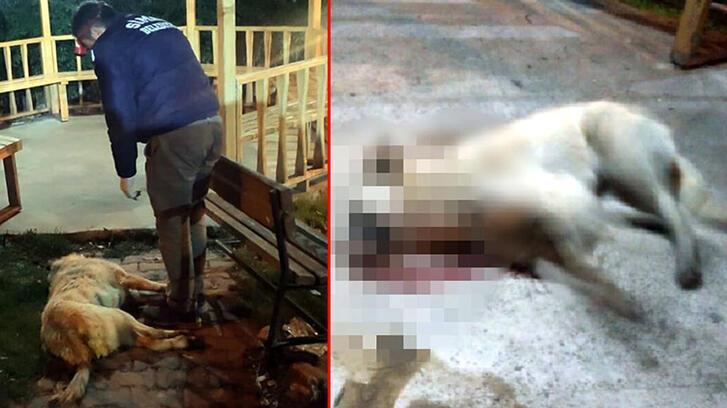 Simav'da 5 köpek zehirlenerek öldü! Olayla ilgili flaş gelişme