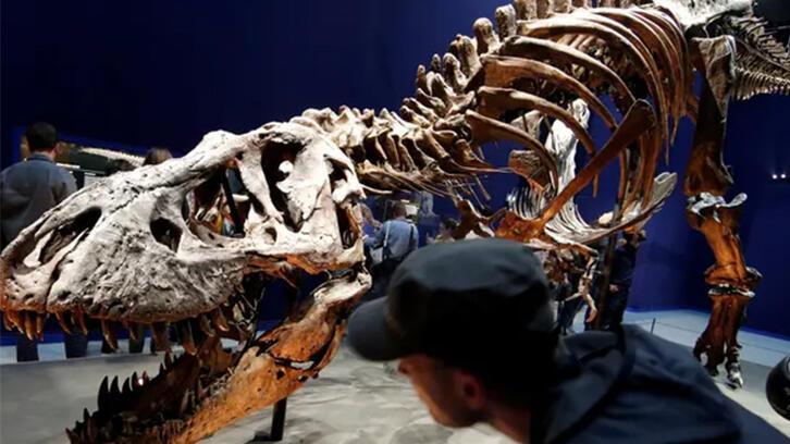 T-rex için yeni yapılan araştırma sonucu şaşırtıyor