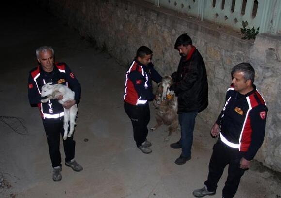 Dereye düşen 4 küçükbaş hayvan kurtarıldı