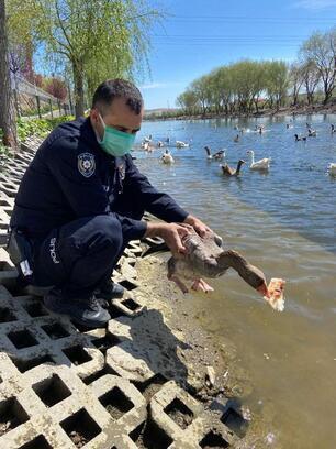 Kızılırmak'ta aç kalan kazları polisler besledi