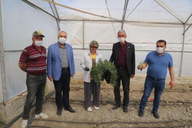 Çameli'de 3 milyon domates fidesi, belediye projesiyle serada toprakla buluşacak
