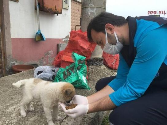 Büyükşehir ekiplerinden sokak hayvanlarına özel ilgi