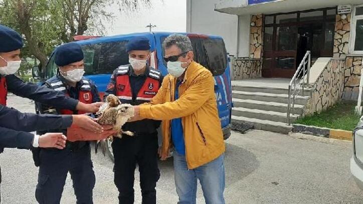 Yaralı bulunan kızıl şahin tedavi altına alındı