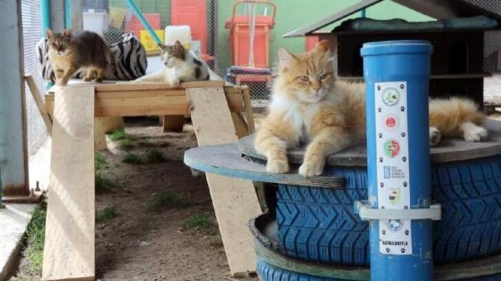 Kedi beslenme ve sığınma evi engelli hayvanlara yuva oluyor
