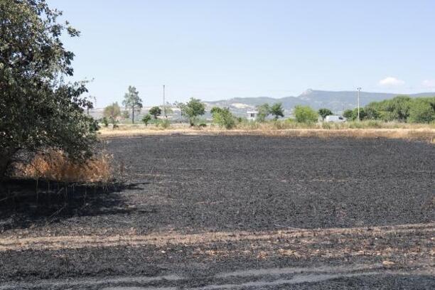 Buğday tarlası yandı