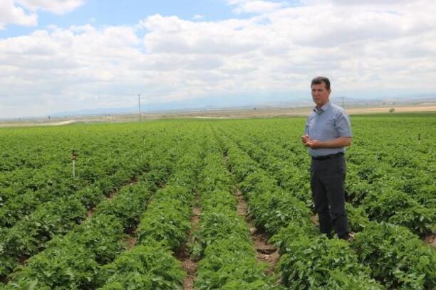 Patates üreticisi bu yıl umutlu