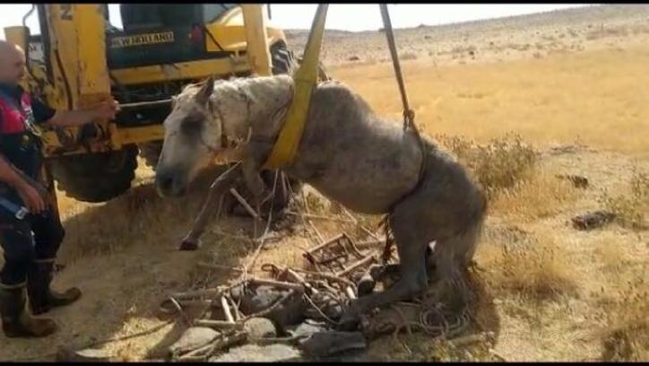 Kuyuya düşen at, itfaiye ekiplerince kurtarıldı