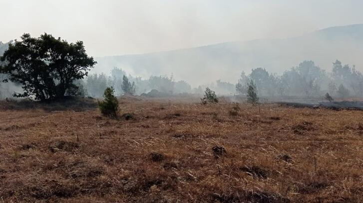 Son dakika... Balıkesir'de orman yangını! Ekipler bölgeye sevk edildi