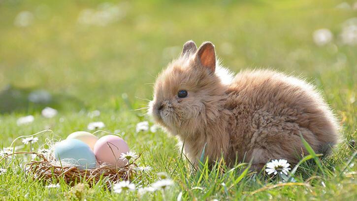 Keloğlan masalı: Yumurta hırsızı
