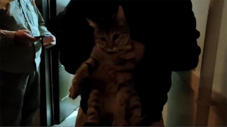 Bu nasıl vicdansızlık! Eve tuvaletini yapan kedisine şiddet uyguladı